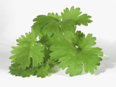 File:What-is-cilantro-1-1-.jpg
