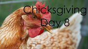 ChicksgivingDay8