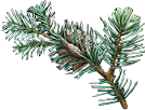 File:Branch of the world tree.png