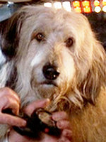 File:Einstein (dog).jpg
