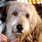File:Einstein (dog)2.jpg