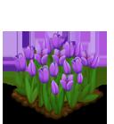 Deco 1x1eastertulips purple@2x