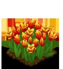 Deco 1x1eastertulips orange@2x