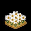 Decoration daffodilpatch thumbnail@2x