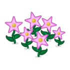 Decoration starflowers pink thumbnail@2x