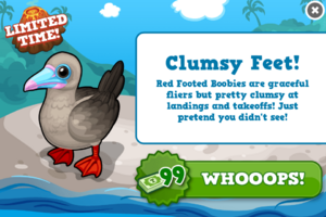 Red footed booby modal