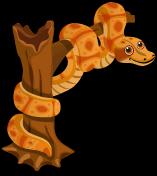 Boa Constrictor single