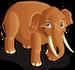 Indian Elephant single