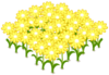 Lovely Yellow Flowerbed