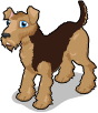 Airedale terrier static