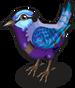 Splendid Fairy Wren