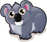 Koala single