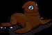 Northern fur seal single