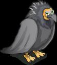 Californian Condor single