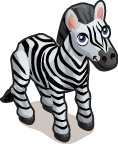 Zebra single