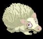 Albino hedgehog static