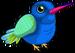 Broad billed hummingbird single