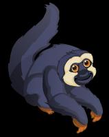 White-faced Saki Monkey single