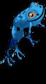 Blue poison dart frog an