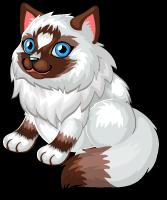 Ragdoll cat single