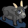 Pygmy Goat single