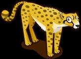 Cheetah single