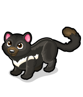 Tasmanian devil cat single