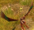 Ocypete the Swiftwing - Harpy Hero