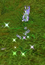 White Flower wild