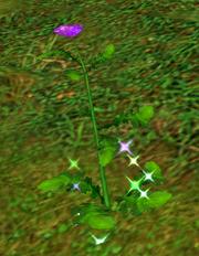 Dragon Flower wild