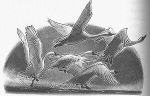 MessengerSwans