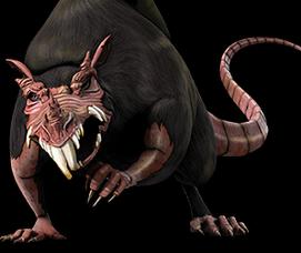 Giant ratt