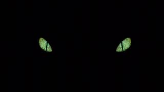 Lh Eyes
