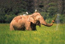 File:250px-Re-exposure of elephant - lahugala park1.jpg