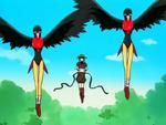 Chimera Lovebirds