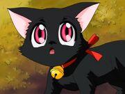 Zoey(Cat)