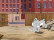 Spike chase Tom And Jerry