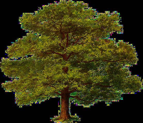 File:Oak Tree 0.png