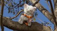 Rescue Meow