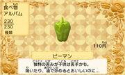 Green pepper jp