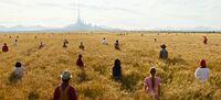 People Fields Tomorrowland