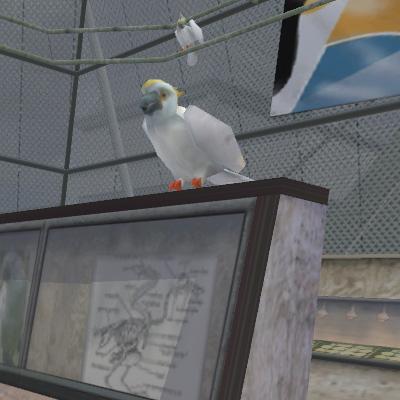 File:Animal Cockatoo.jpg