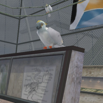 Файл:Animal Cockatoo.jpg