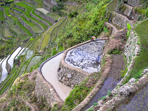 File:Banaue rice terraces. Terrazas de arroz de Banaue..jpg