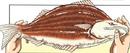 Striped Salmon Manga color