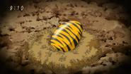 Chicken Tiger egg