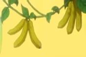 BananaCucumber