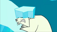 Yukon polar bear hit by ice