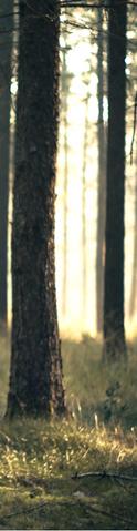 File:Originals Battle Pre-Merge Background 2.png