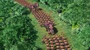 Nanman parade